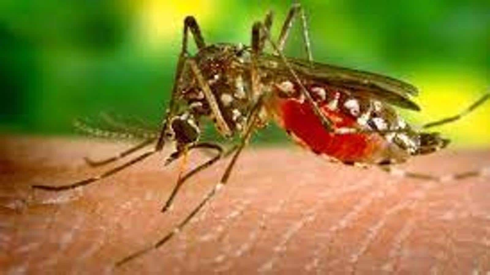 UP's first Zika virus case: Centre rushes team to Kanpur