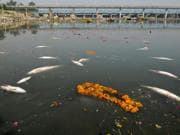 After the festivities: Yamuna riverbed a dump yard post Ganesh...