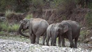 Three days after an elephant was killed after being hit by a train inside the Rajaji Tiger Reserve, members of the Northern Railway Men's Union have opposed the forest department's move to file a case against the train driver.(HT FILE)