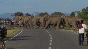 File photo of a herd of wild elephants crossing a road at Sonahatu in Ranchi.(Sanjoy Dey/ HT file photo)
