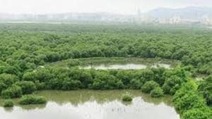 According to non-profit Mangrove Society of India (MSI), intertidal regions are in high demand as they can be potential hotspots for construction and infrastructure development.(FILE)