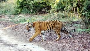 Part of a proposed road in Uttarakhand to connect the Kumaon and Garhwal regions runs through the Corbett Tiger Reserve.(HT FILE PHOTO)