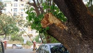 A visit to Ram Nagar colony last week revealed that on a number of majestic trees, entire branches have been cut from the trunk itself.(SANKET WANKHADE/HT PHOTO)