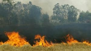 Farmers claim that in most cases, the cause of the fire is short-circuiting of overhead high-tension electricity wires that criss-cross their fields.(HT Photo)