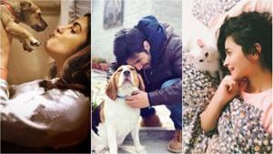Priyanka Chopra with Diana, Varun Dhawan with Angel and Alia Bhatt with Edward.(Instagram)
