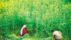 Through social media information related to grant-in-aid schemes will be given to farmers.(HT FILE)