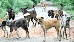Four stray dogs mauled a toddler in a sector 18 park in Chandigarh 10 days ago.(HT File Photo)