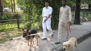 The MC has so far registered 6,600 pet dogs in the city since 2010 but the number is believed to be inaccurate.(HT Photo)