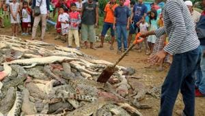 Local residents look at the carcasses of hundreds of crocodiles from a breeding farm after they were killed by angry locals following the death of a man who was killed in a crocodile attack in Sorong regency, West Papua, Indonesia on July 14.(Antara Foto/Olha Mulalinda /via REUTERS)