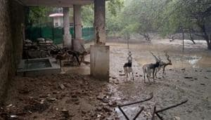 The noise of hammers breaking the night shelter of the blackbucks, dumping of cement bags and the scattered debris traumatised the animals inside Delhi zoo (pictured), which reportedly then started to fight among themselves.(Joydeep Thakur)