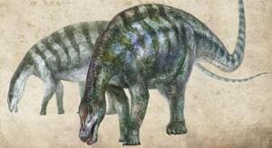 The dinosaurs are both alvarezsaurs, an enigmatic group of theropod (meat-eating) dinosaurs which have many similarities with birds.(Reuters/Picture for representation)