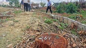 The forest department will have a confirmation on the number of trees cut by Wednesday.