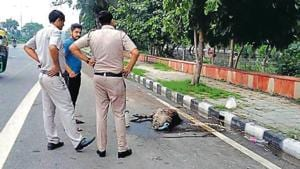 Police officers chased down the bird before tying its legs. (Sourced: Delhi police)