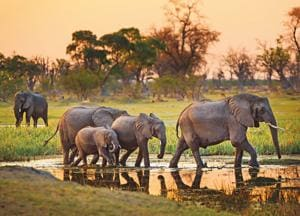 Elephants gather every morning and evening at the watering hole in Botswana(Shutterstock)