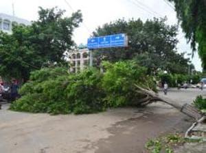A tree uprooted due to heavy rain near Rialto chwok in Amritsar.(Sameer Sehgal/HT)