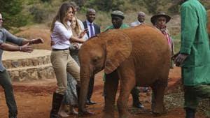 US first lady Melania Trump pets a baby elephant at Nairobi National Park in Kenya.(AP)