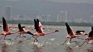 The number of Flamingos decreases at Kopri creek due to illegal dumping.(HT Photo)