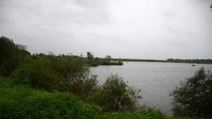 Wetlands in Nerul are under threat from urbanisation(HT Photo)