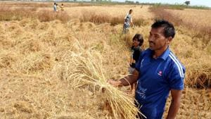 Compared to 2014-15 and 2015-16 (the immediate preceding years when two older crop insurance schemes were in force), premiums shot up nearly 348% – from about Rs 10,560 crore to about Rs 47,408 crore.(Diwakar Prasad/ HT Photo)