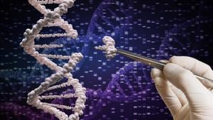In a nutshell, we don't know the limits of the new technologies, can't guess what lifetime effects a single gene alteration will have on a single individual, and have no idea at all what effects alteration of genes in sperm or ova or a foetus will have on future generations(SHUTTERSTOCK)