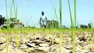 Replying to a debate on drought and the measures the Maharashtra government has taken so far, CM Fadnavis said the state has made budgetary allocation of Rs 3,000 crore on its own, without waiting for the Centre's assistance.(Representative Photo)