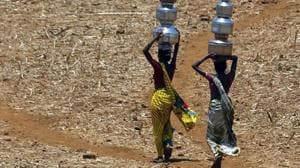 Kharif crop has suffered losses due to less rainfall recorded in several parts of the state, and timely relief measure, fodder depot for livestock animals and additional funds for cow shelters can help address the problem, the Centre was informed.(AP/Picture for representation)