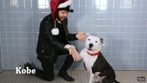 """With Christmas just around the corner, TV network TBS recruited magician John Stessel to """"bring the magic of the holidays to these animal shelter dogs"""".(TBS/YouTube)"""