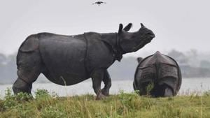 The last time a rhino was killed in Gorumara, where an estimated 50 of the endangered animals live, was one year and nine months ago.(AFP)