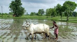 The agriculture department estimates the loan waiver to cost Rs 35,000 crore. Image for representation.(REUTERS file photo)