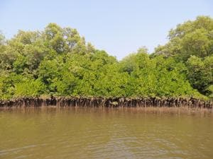 Wetland demarcation for inland areas has been completed for Sindhudurg and Ratnagiri districts.(HT FILE)