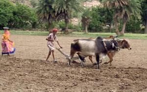 A farmer tills his farm.HT FILE PHOTO(HT File photo)