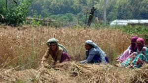 The cabinet on Monday is likely to approve a package for farmers to boost their income and address distress in the farm sector.(HT Photo)