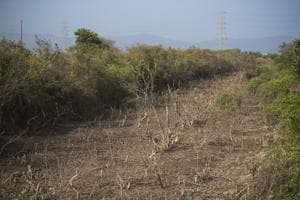 The state environment department first began the mapping exercise in the Konkan belt as it has maximum wetlands in the state.(HT file photo)