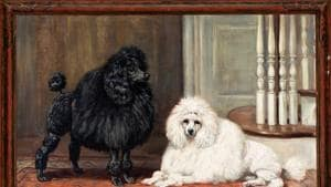 Dogs have their day at revived NY museum