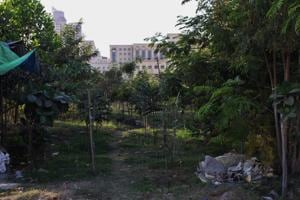 Anuradha Babar, an official with the TMC's tree department said most trees in the city have been geo-tagged, with the details uploaded on their website.