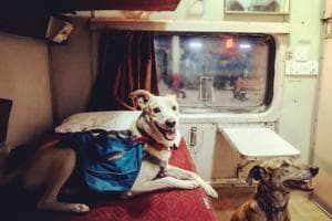Tails from all over:Meet India's most well-travelled pets
