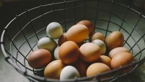 Novel immunotherapy may treat egg allergy