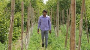 Farmer Satish Sehrawat, an award-winning farmer from Mankrola village inspects his farm.(Parveen Kumar/HT Photo)