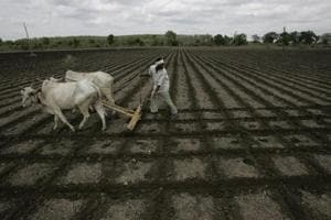Farm crisis and the long-running drought are likely to be key issues in the seat, which is considered to be a BJP stronghold.(HT Photo/Representative Image)