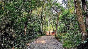 Although Phayeng is not a reserve forest, efforts are under way to give it a community forest tag. It has 95 tree species with medicinal and timber value.(Journey Basket)