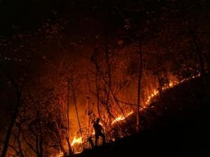 22 hectares of protected forest was charred in fires at six areas inside the Sanjay Gandhi National Park (SGNP) on March 14.(HT file photo)