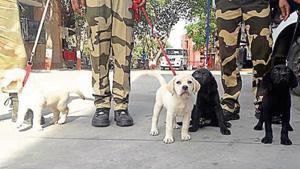 Sam, Coco, Kiwi: Labradors who are CISF's newest recruits