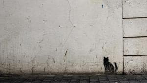 Here's how superstitions spread in society