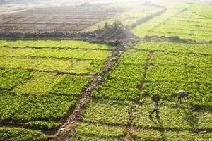 Men work on a vegetable farm outside Bandra railway station.(Pratik Chorge/HT Photo)