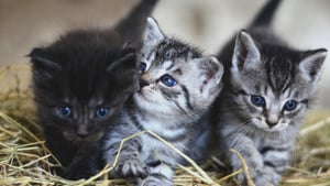 Members of the housing society had alleged that Patel tried to burn the kittens two days ago, but luckily they managed to escape.(Reuters/ Representative Image)