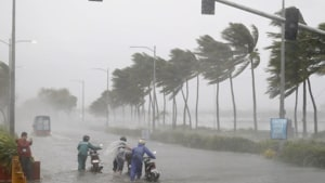 Experts concerned over impact of cyclone on ecology