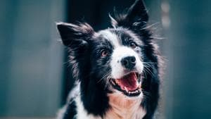 Dogs, on the other hand, showed no particular inclination to feed other dogs (representational image).(Unsplash/@baptiststandaert)