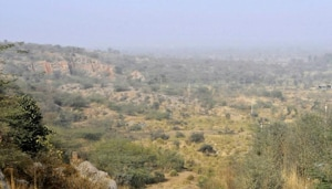 Forest department officials said that this was also being done to keep wildlife away from human habitations skirting the Aravallis.(HT Photo)