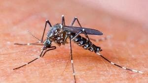 Health workers deployed in dengue and malaria surveillance activities can mark the spots where they find mosquito-breeding or the spots that are potential breeding sites.(Shutterstock)
