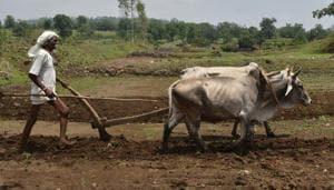 LokSabha elections 2019: Tribal, farmer issues form main poll plank in Madhya Pradesh